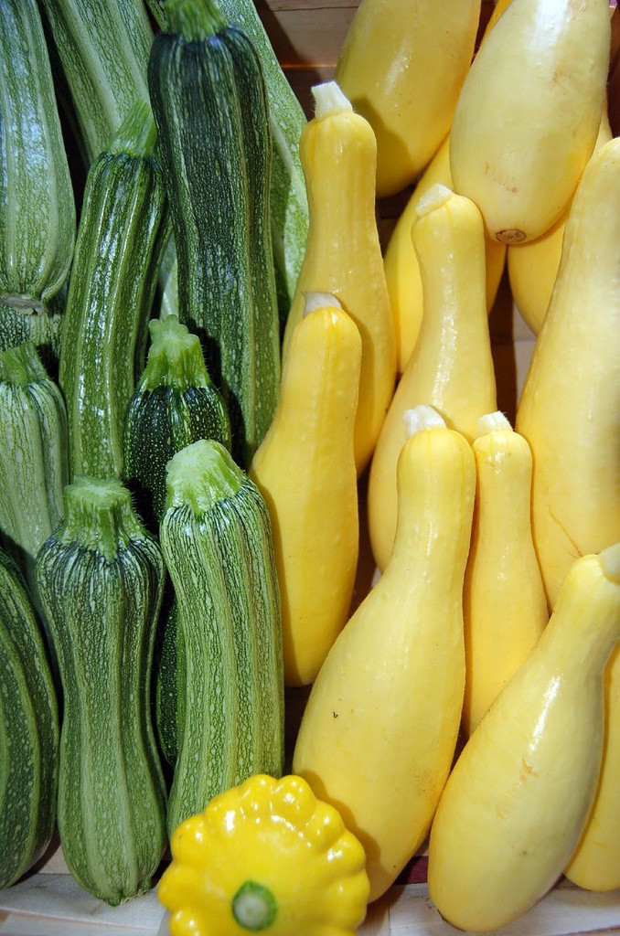 Types Of Summer Squash  Growing Summer Squash Planting Summer Squash Plants