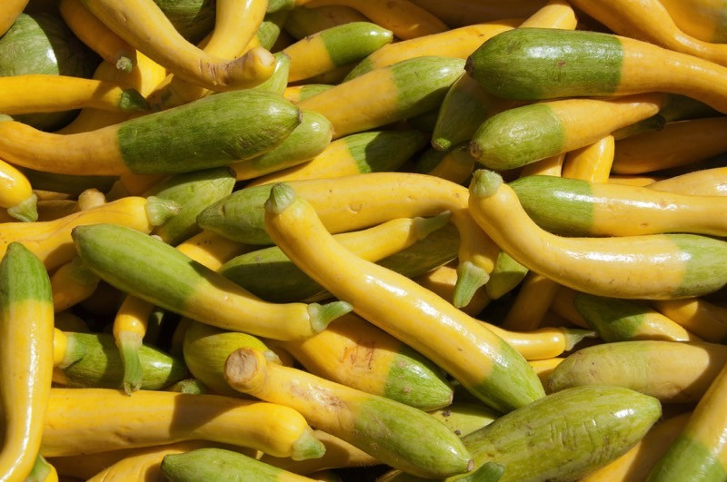 Types Of Summer Squash  10 Summer Squash Varieties Some You Know Some You Don t