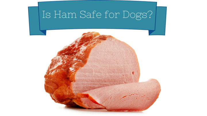 Why Do You Eat Ham On Easter  Can Dogs Eat Ham Smart Dog Owners