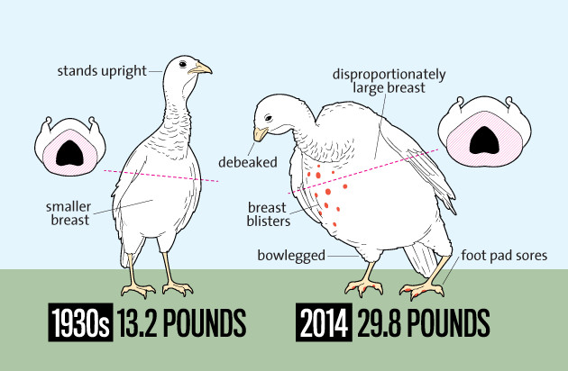 Average Size Turkey For Thanksgiving  5 Reasons to Bypass the Turkey this Thanksgiving d