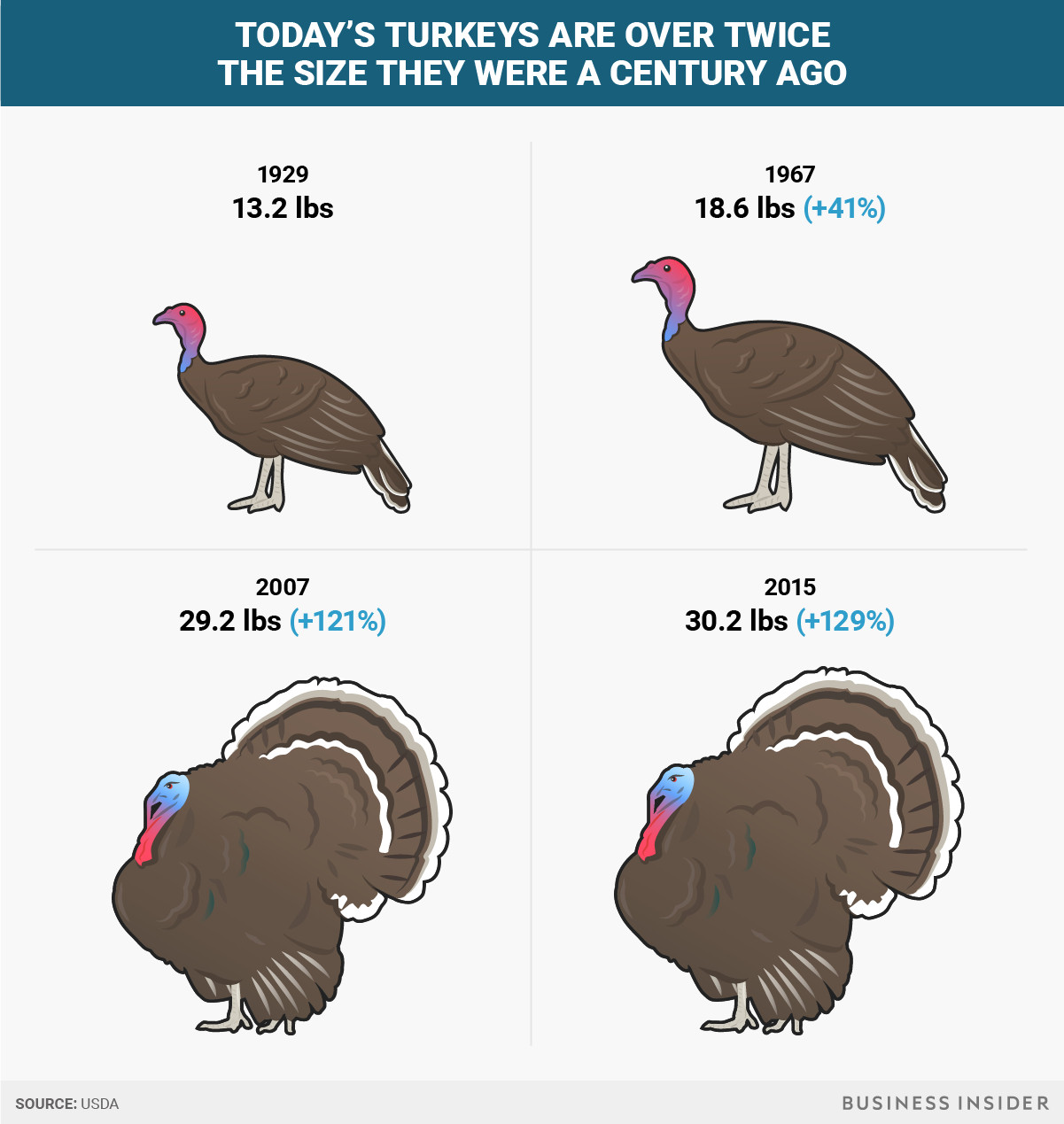 Average Size Turkey For Thanksgiving  Thanksgiving turkeys have doubled in size since the 1950s