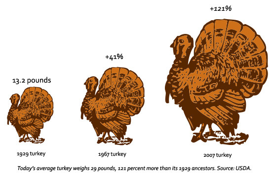 Average Thanksgiving Turkey Weight  Give Thanks Science Supersized Your Turkey Dinner