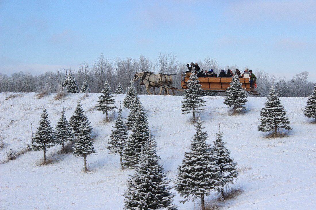 Candy Cane Christmas Tree Farm  Most excellent Christmas Tree Farms Across America