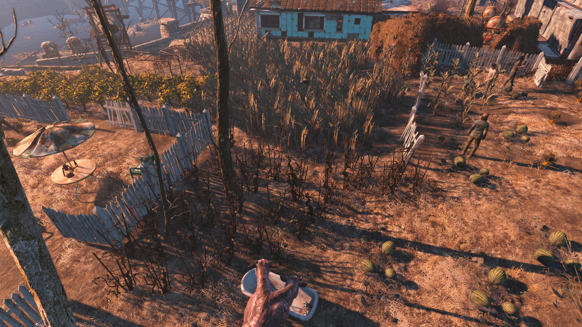 Corn Fallout 4  Fallout 4 Page 103 Gaming GTAForums