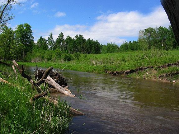 Fall River Wild Rice  Wild Rice River
