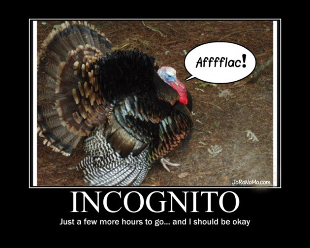 Funny Thanksgiving Turkey Pictures  Funny Turkey Pics on Pinterest