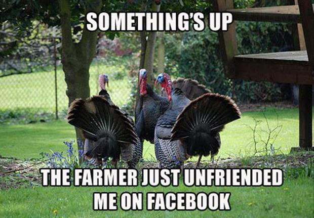 Funny Thanksgiving Turkey Pictures  30 Funny animal captions part 9 30 pics