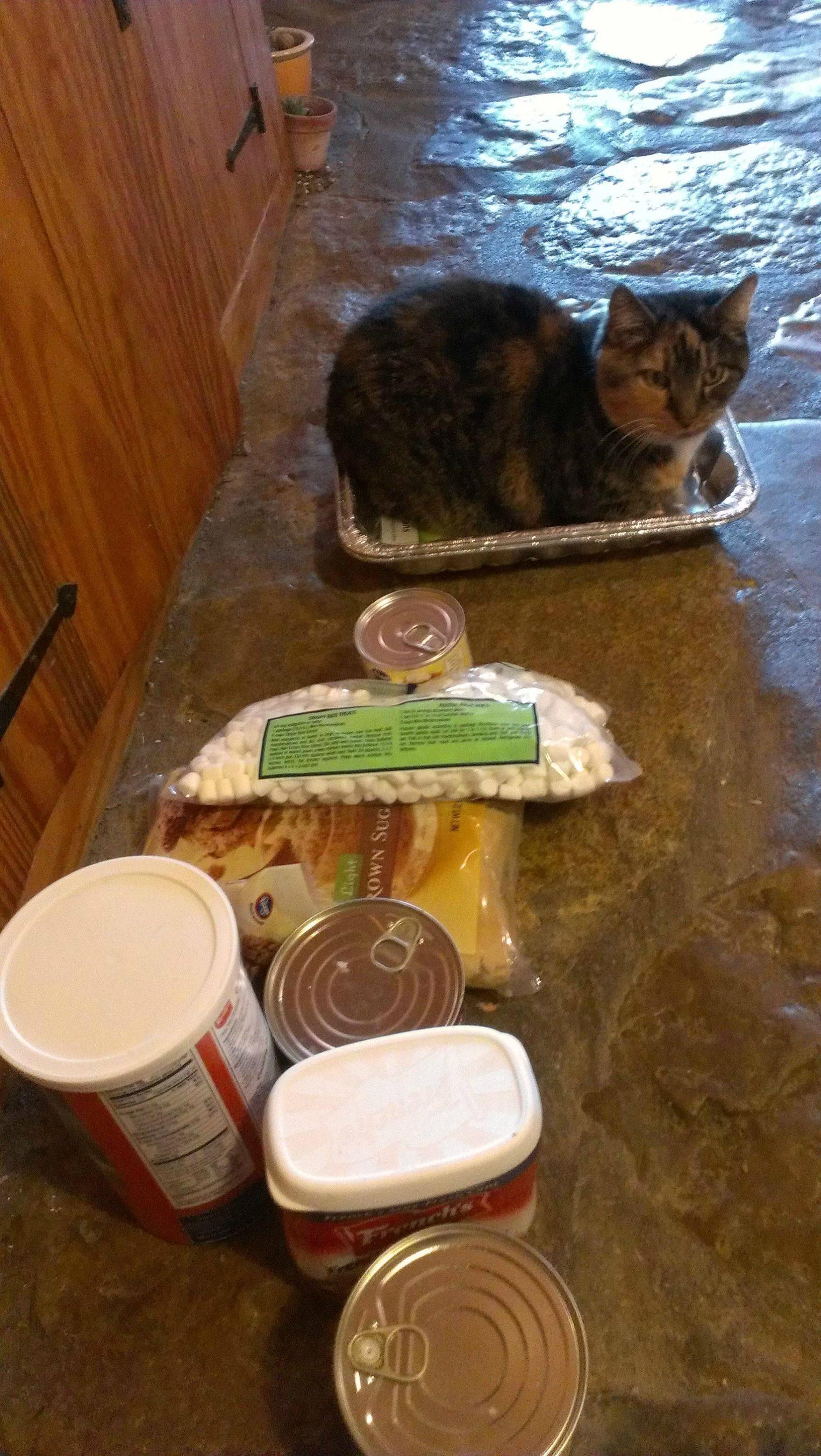 Furrs Thanksgiving Dinners  12 Cats Ready to Help You With Thanksgiving Dinner