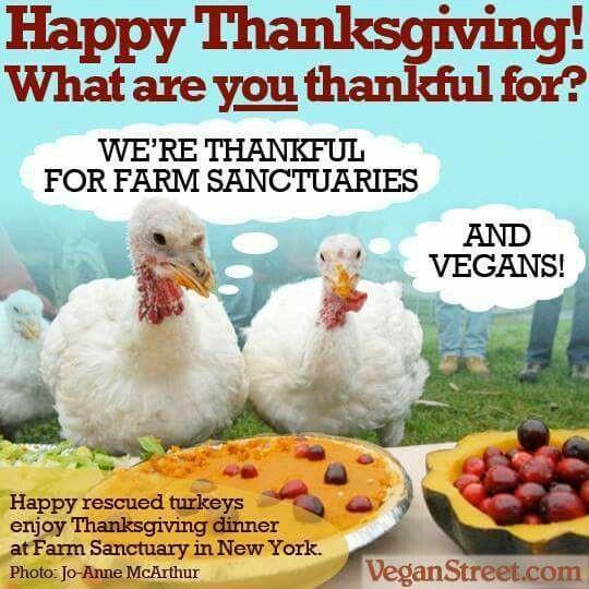 Happy Thanksgiving Vegetarian  310 best Funny Vegan Stuff images on Pinterest