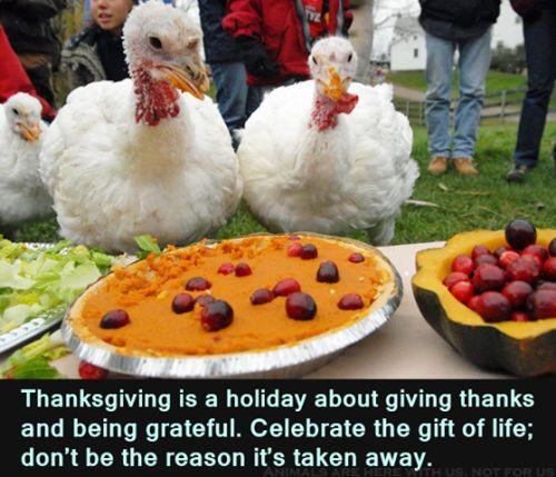 Happy Vegan Thanksgiving  Happy Thanksgiving – Vegan – Thanksgiving Blessings