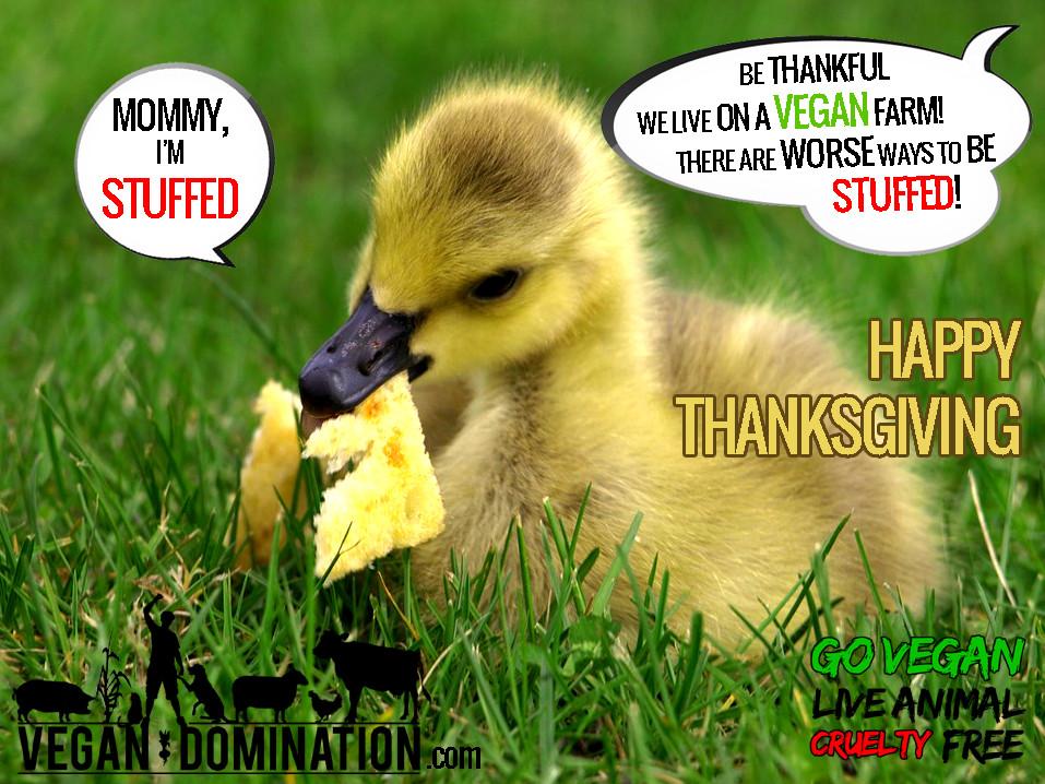 Happy Vegan Thanksgiving  HAPPY THANKSGIVING
