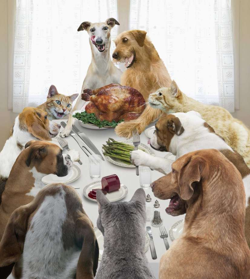 Lunds Thanksgiving Dinners  Don't let your holiday gathering go to the dogs San