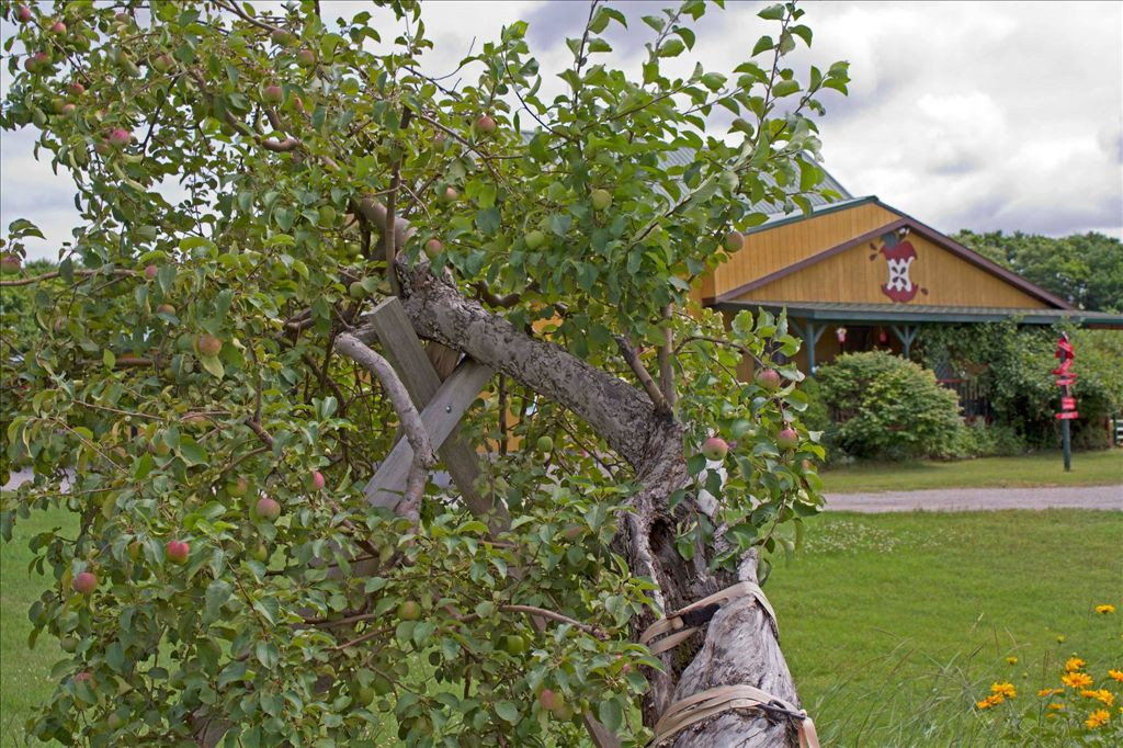 Rogers Hot Dogs Fall River  Knaebe s Mmmunchy Krunchy Apple Farm
