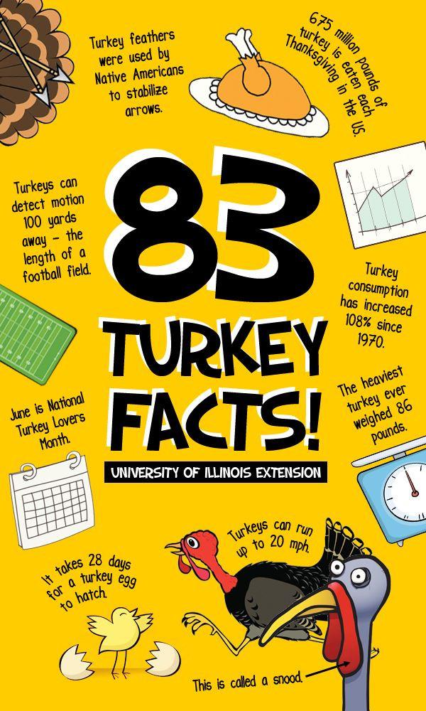 Thanksgiving Turkey Facts  Best 25 Turkey facts ideas on Pinterest