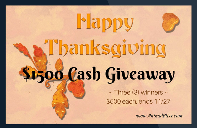 Thanksgiving Turkey Giveaway  Thanksgiving Cash Giveaway 3 winners $500 each ends 11