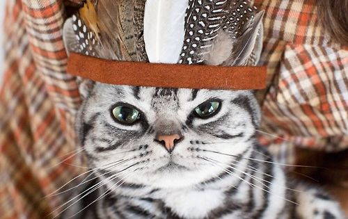 Thanksgiving Turkey Indian Style  Indian Style CatLover Pinterest