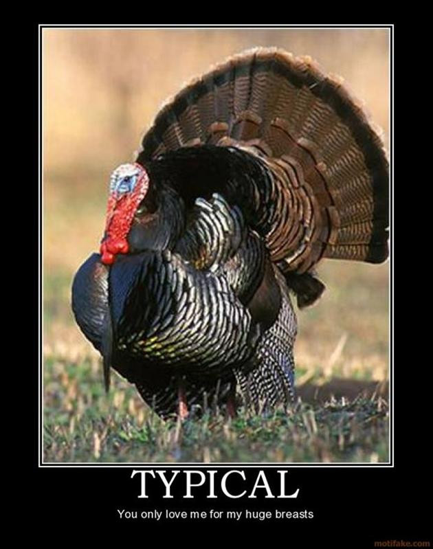 Thanksgiving Turkey Pictures  Funny Thanksgiving pilation 41 Pics