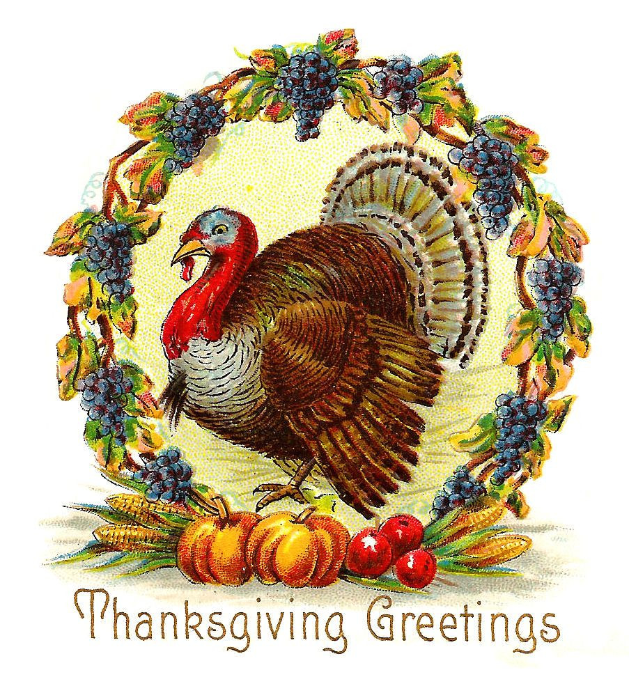 Thanksgiving Turkey Pictures Free  free pilgrim clipart images