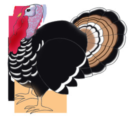 Thanksgiving Turkey Png  Happy Thanksgiving Clipart