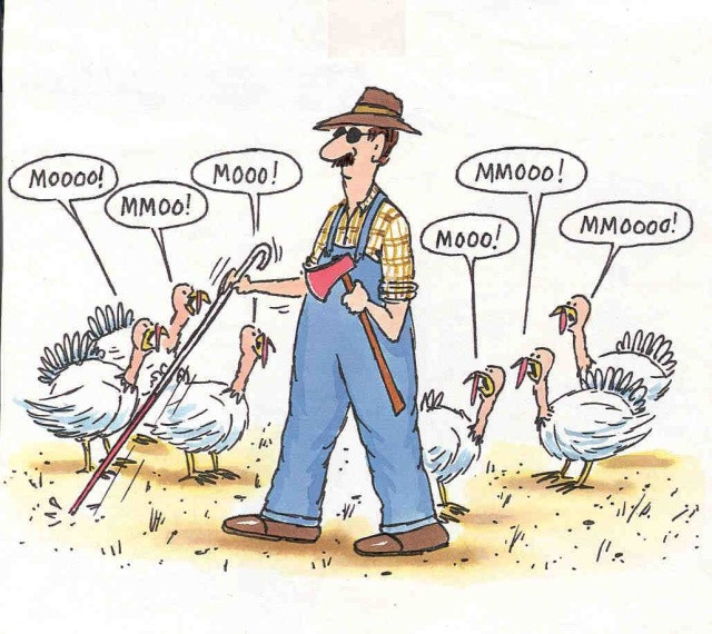 Turkey Humor Thanksgiving  holidays