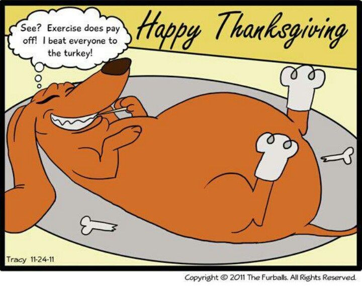 Turkey Humor Thanksgiving  377 best images about Dog Humor on Pinterest