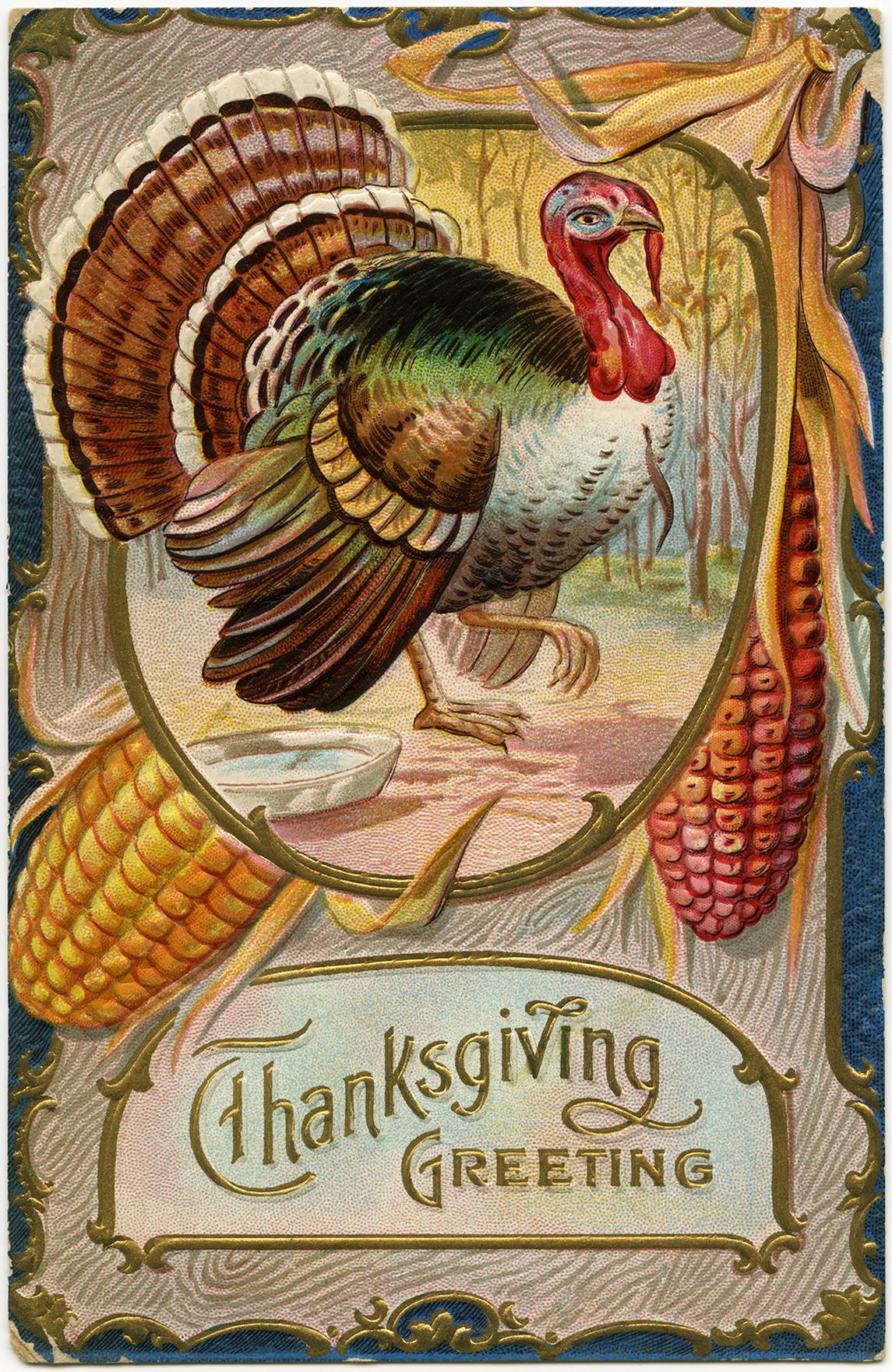 Turkey Pics Thanksgiving  Thanksgiving Greeting Turkey Postcard Old Design Shop Blog