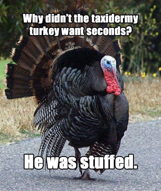 """Turkey Puns Thanksgiving  Meet """"Terrible Thanksgiving Pun Turkey"""""""