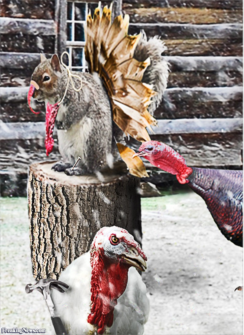 Turkey Substitutes For Thanksgiving  Turkey Hybrids Freaking News