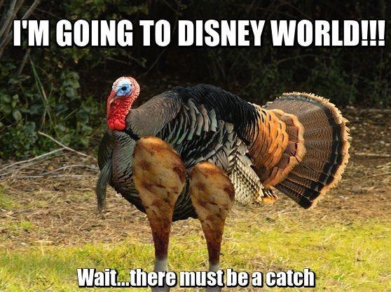 Turkey Thanksgiving Meme  9 best Disney Fun s images on Pinterest