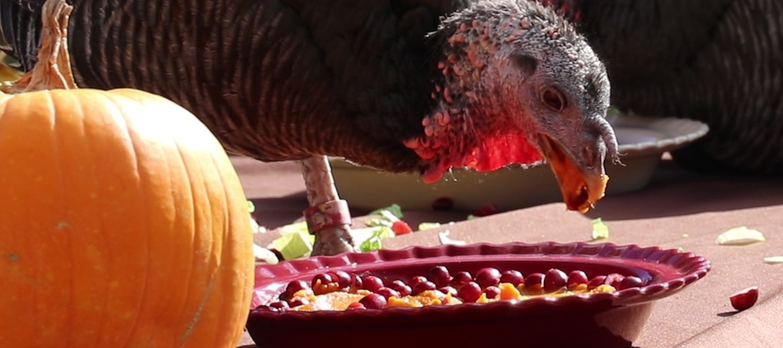 Vegan Thanksgiving Los Angeles  Thanksgiving dinner This vegan meal is for turkeys on the