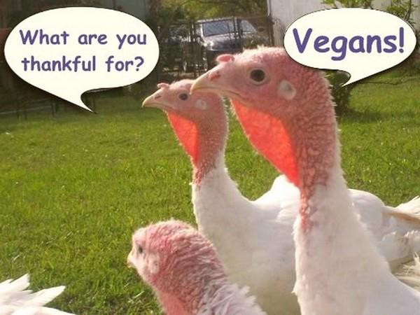 Vegan Thanksgiving Memes  Happy Vegan Thanksgiving Frugal Vegan Stuffing