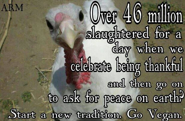 Vegan Thanksgiving Memes  218 best Ve arian To Vegan images on Pinterest