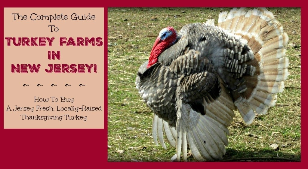 When To Buy Fresh Turkey For Thanksgiving  organic turkey farms in nj Archives Things to Do In New